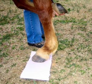 Lift the other foot to fully weight the hoof on the ground.