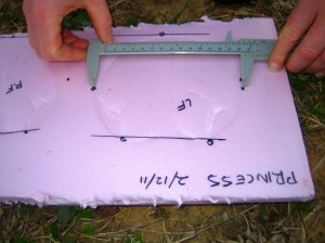 Measure the width of the hoof wall.