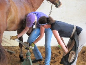 Horse owner learning to trim hoofs
