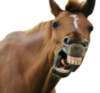Yawning Horse clear background